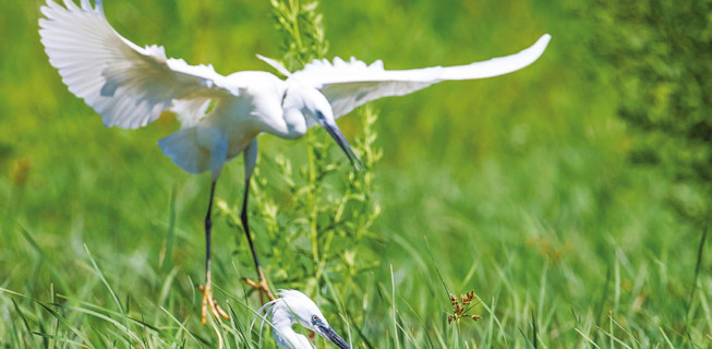 Ekolojik Uygulamalarla Yeni Yaklaşımlar